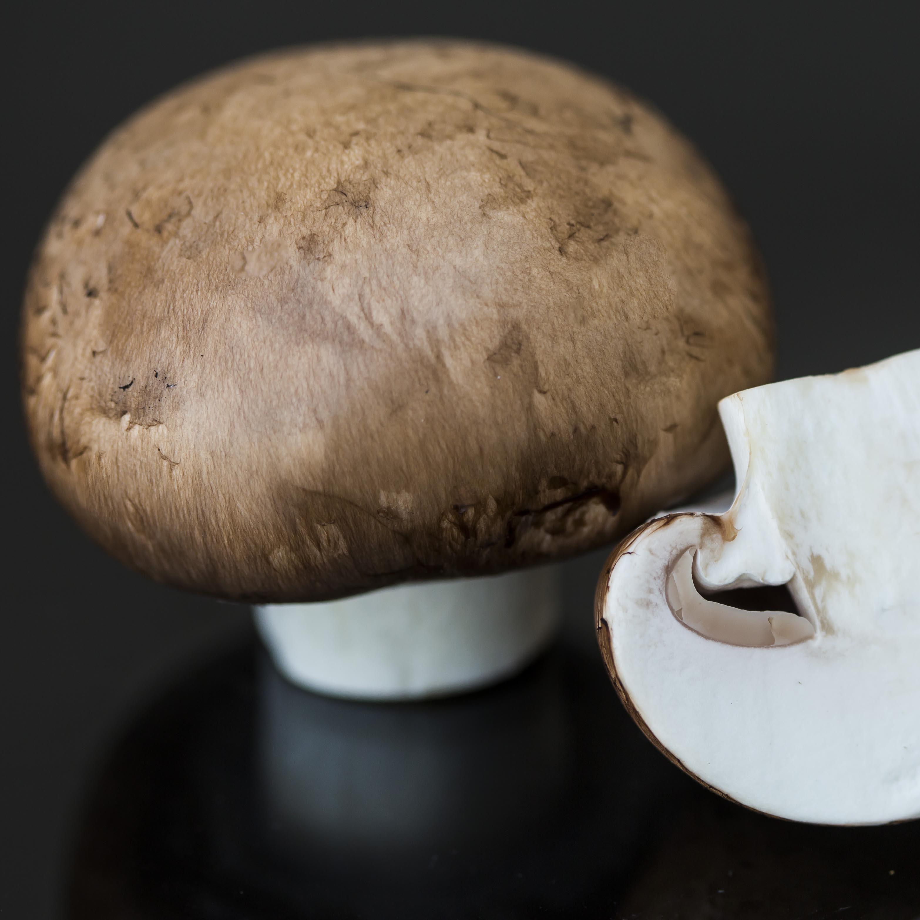 frische pilze frische pilze aus bayern f r h ndler und gastronomie. Black Bedroom Furniture Sets. Home Design Ideas
