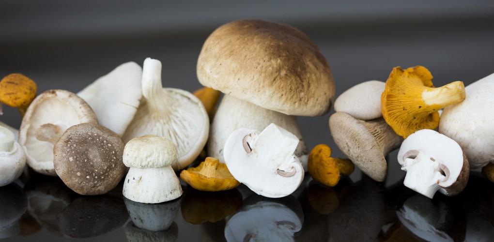 frische pilze aus bayern f r h ndler und gastronomie. Black Bedroom Furniture Sets. Home Design Ideas